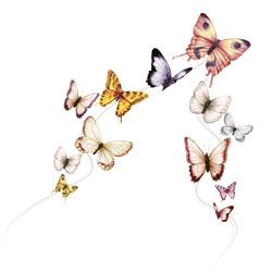 Papillons liés par un fil